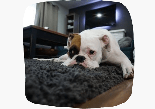 Best Rug Cleaning Service Elwood