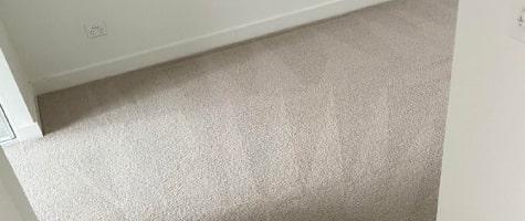 expert carpet cleaners in elwood